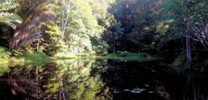 Sundari abundant forest after 10 years
