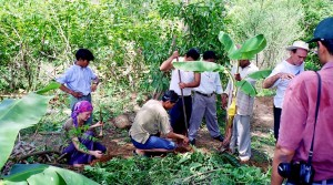 creating permaculture gardens