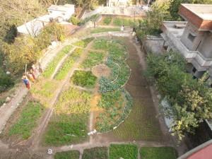 Ramana's edible garden 6 weeks later
