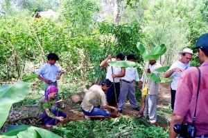 Creating Banana circle in Aurivle