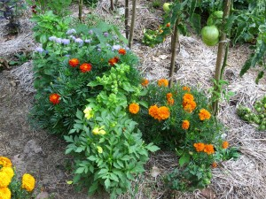 Flowers and herbs are part of every edible landscape we design
