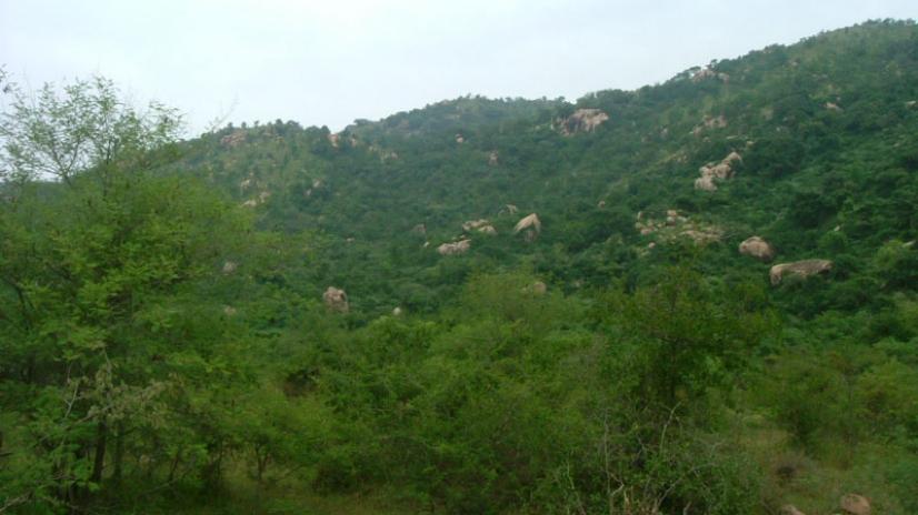 Greening Arunachala