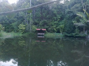 Lake and Rob's pavillion rainforest arboretum