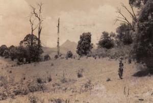 Sundari, degraded cattle pasture1977